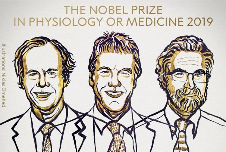 Bu yılki Nobel Tıp Ödülü'nü 3 bilim insanı William G. Kaelin Jr, Sir Peter J. Ratcliffe ve Gregg L. Semenza kazandı. ile ilgili görsel sonucu